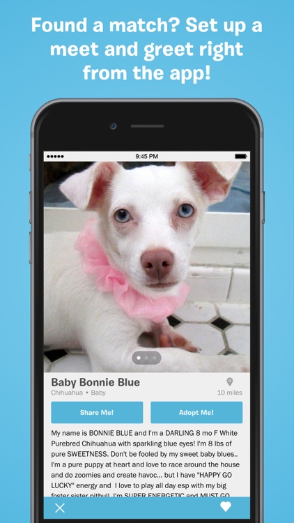 BarkBuddy - Adopt a Dog Near You screenshot-1