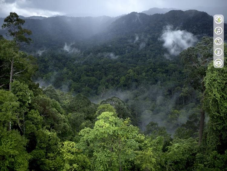 Jungle Spirit screenshot-4