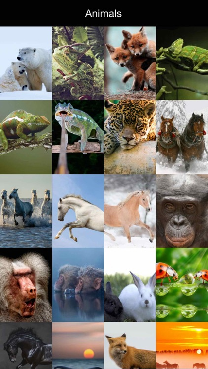 HD Wallpapers for Animals Background & Lock Screen