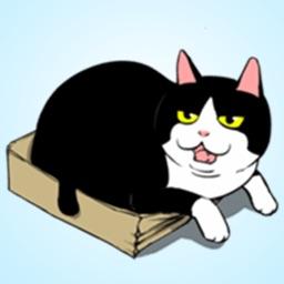 Playful Black Cat