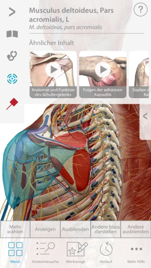 Muscle and Skeleton Premium Anatomy im App Store