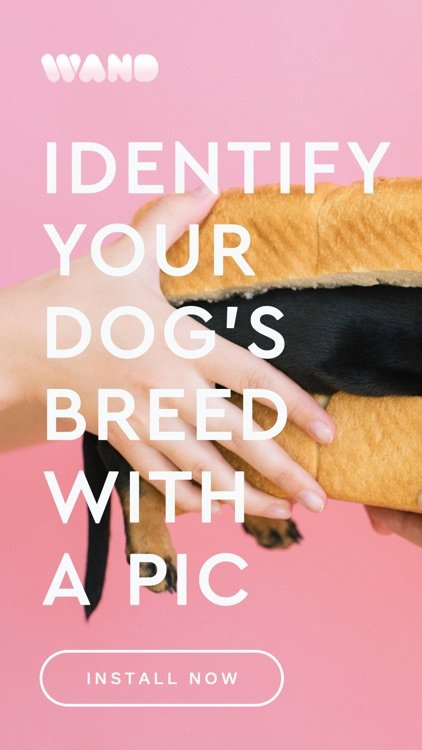 Wand - Identify your pet