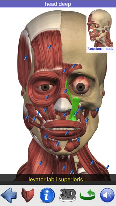 download Visual Anatomy apps 0