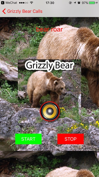 Real Grizzly Bear Hunting Calls & Sounds