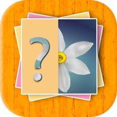 Activities of Flower Quiz Kids Game