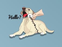 Romeo the Labrador