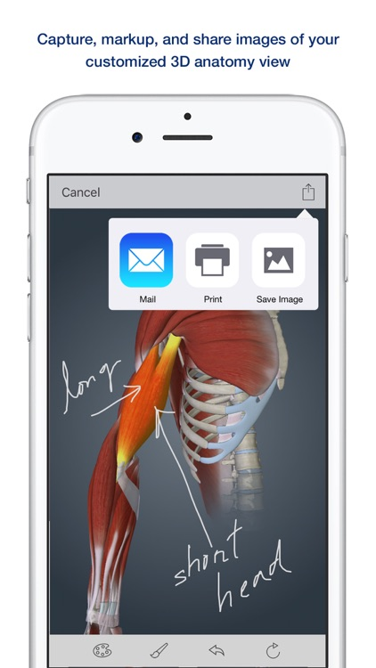 Muscle Anatomy: A Johns Hopkins Medicine 3D App screenshot-1