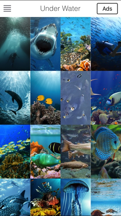 Sea Underwater Backgrounds Lock Screen & Themes