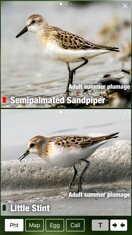 All Birds Scotland Complete Guide Scottish Birds