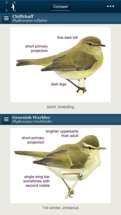 Birds of Northern Europe