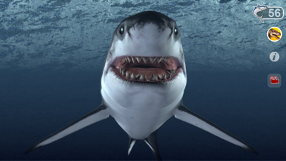 Talking Great White : My Pet Shark-2