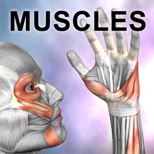 Learn Muscles : Anatomy Quiz & Reference app