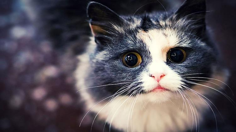 Cat Wallpaper Top HD screenshot-4