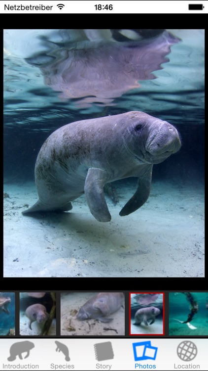 Manatees screenshot-3