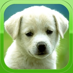Puppy Wallpapers Cute Pictures Images 4