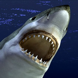 Ultimate Angry Shark Simulator Unlimited