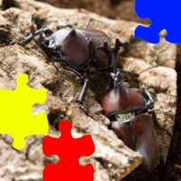 Codes for Rhinoceros Beetle Jigsaw Puzzle Hack