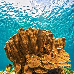 Top Coral Reefs
