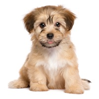 Codes for Puppy Pet Jigsaw Puzzle Cute Dog Animal Kids Games Hack