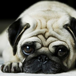 Dog Wallpaper Background Top HD Cool 10000