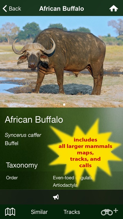 Mammal Guide of Southern Africa