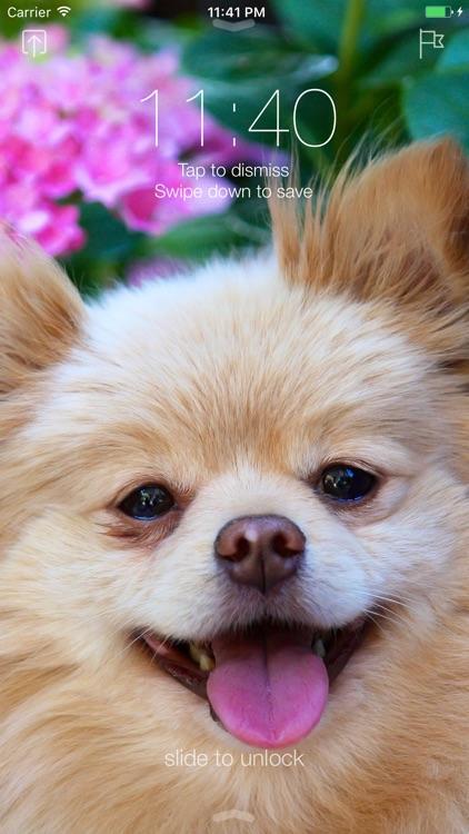 Pomeranian Dog Wallpapers Pro screenshot-3