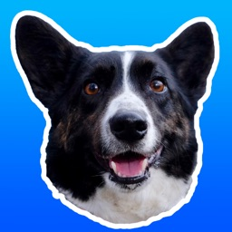 Sodapop the Corgi Stickers
