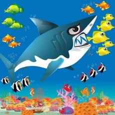 Activities of Shark Journey