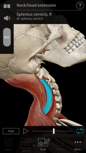 Muscle Premium Human Anatomy Kinesiology Bones On The App Store