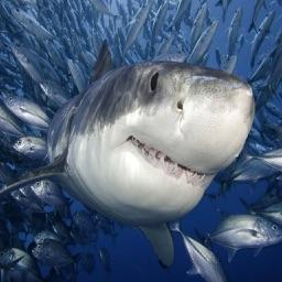 2017 Hungry Shark Fighting Fishing Games
