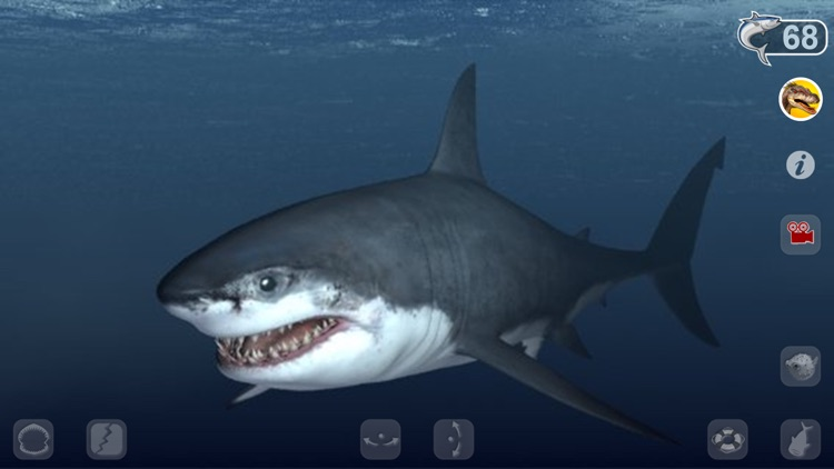 Talking Great White : My Pet Shark screenshot-0