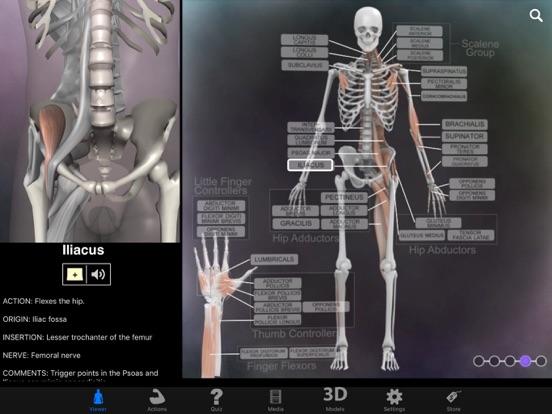 Muscle & Bone Anatomy 3D | App Price Drops