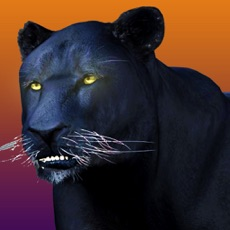 Activities of Deadly Black Panther - WIld Animal Simulator 3D