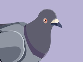 Have you ever been jelly of the pigeons in the park