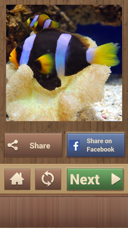 Animal Puzzle Games - Fun Jigsaw Puzzles screenshot-4