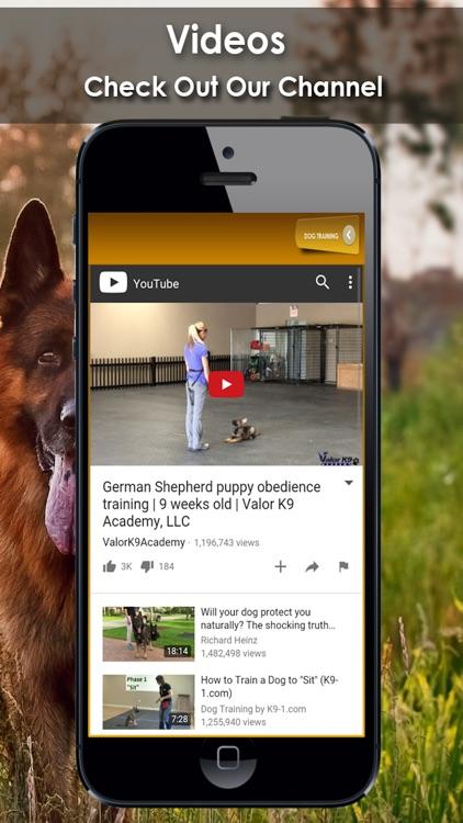K9 German Shepherds Watch Dogs - Adoption & Rescue