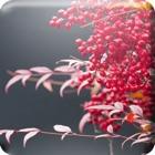 動く・はなといろカレンダー - そよ風に揺れる美しい花たち icon
