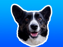 Sodapop is a black and white Cardigan Welsh Corgi who is excited to announce his first ever sticker pack