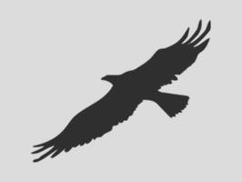 Eagle Sticker Pack for iMessage