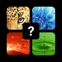 Codes for Pics Quiz Trivia - Fun Top Word Guess Games Hack