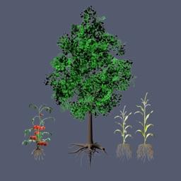Build a Plant