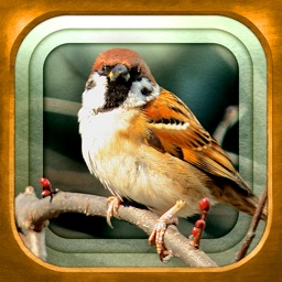 GPS動く野鳥図鑑mini