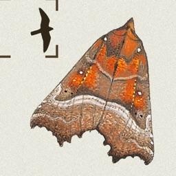 The Moths of Britain & Ireland