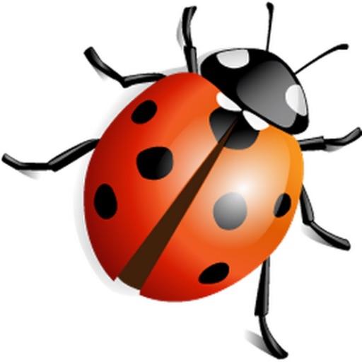 Catch Bugs image