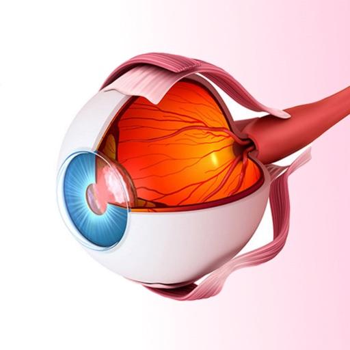 Атлас Анатомии Глаза