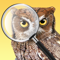 App Icon for iBird Photo Sleuth App in Sweden IOS App Store