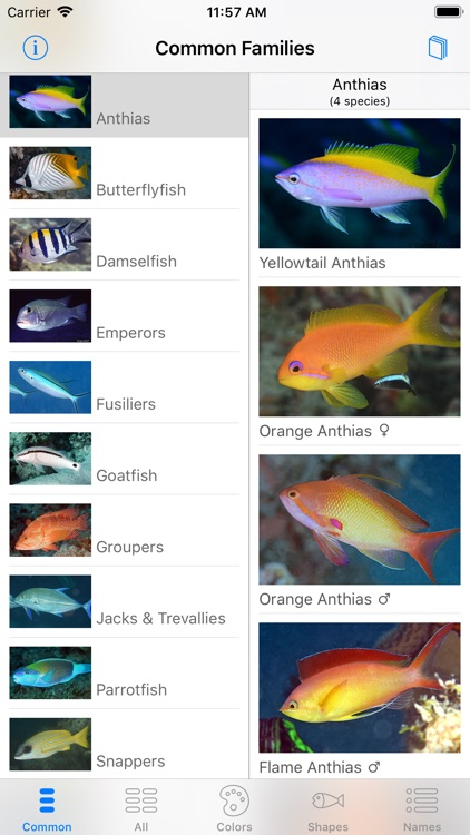 Deep Blue Divers Fish Guide screenshot-5