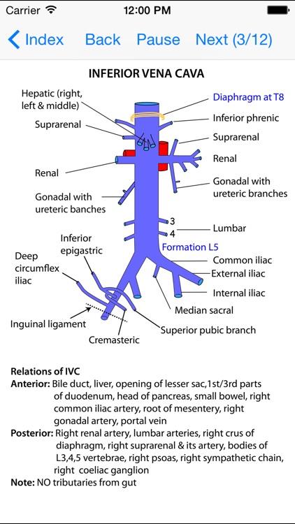 Anatomy Thorax and Abdomen screenshot-4