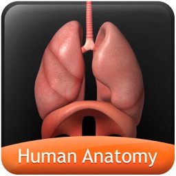 Human Anatomy Explorer