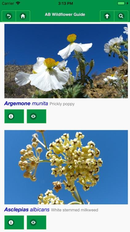 Anza-Borrego Wildflower Guide screenshot-5